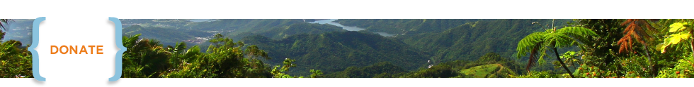 Header Donate_Rain forest in Puerto Rico