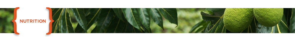 Nutrition Header_Rain forest in Puerto Rico